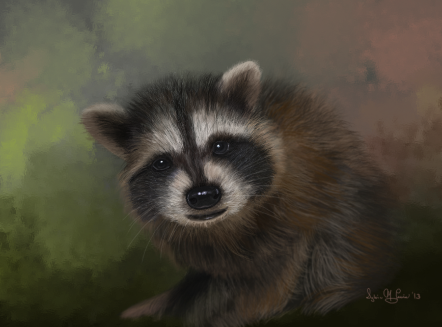study_of_a_baby_raccoon_by_sillybilly60-2013sml.png