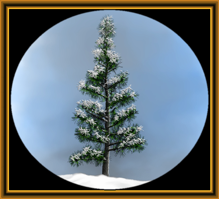 pine with snow.jpg