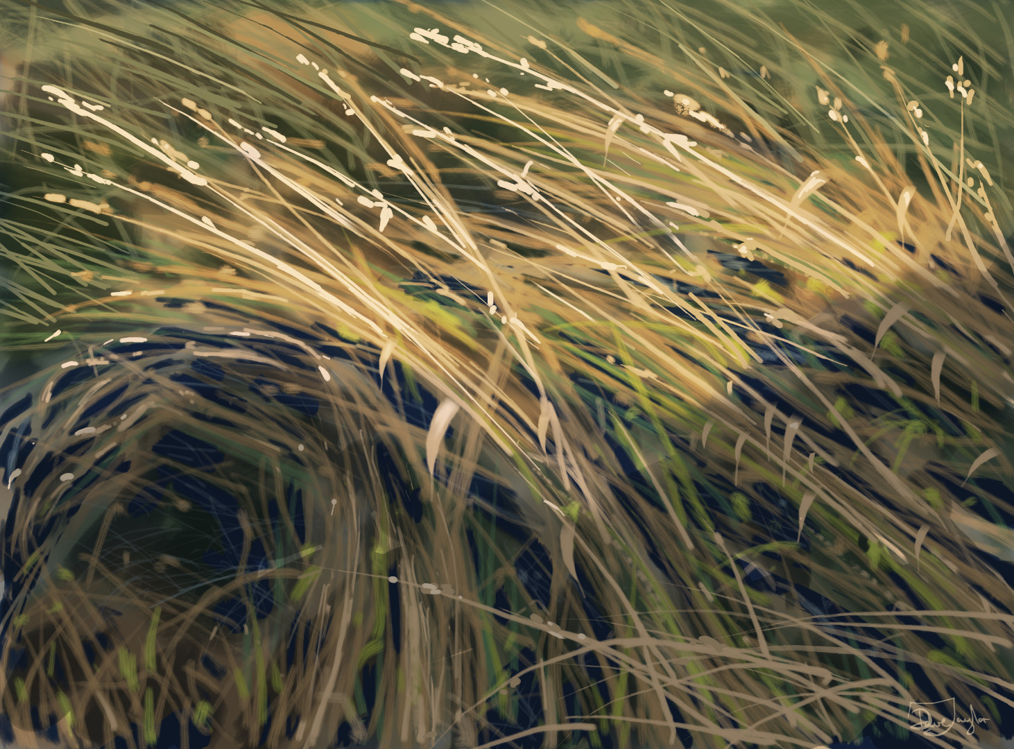bright grasses.jpg