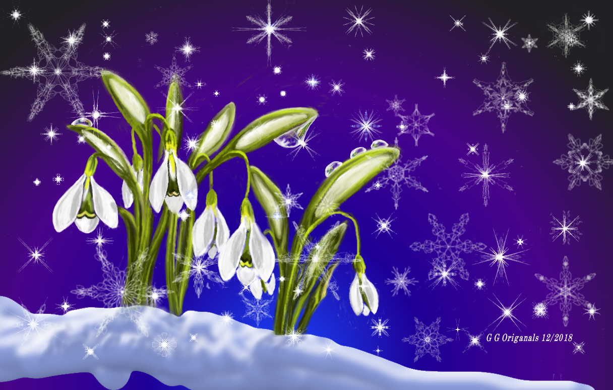 snowdrop flowers in dec.jpg