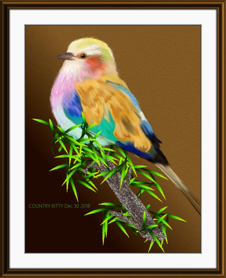 rainbowbird color pencil and pen ink.jpg
