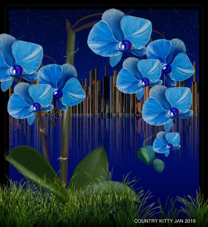 blue orchid.jpg