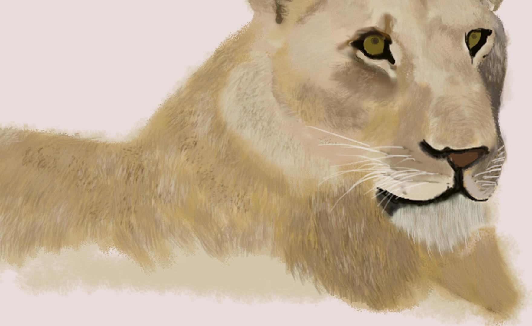 lionessclose.jpg