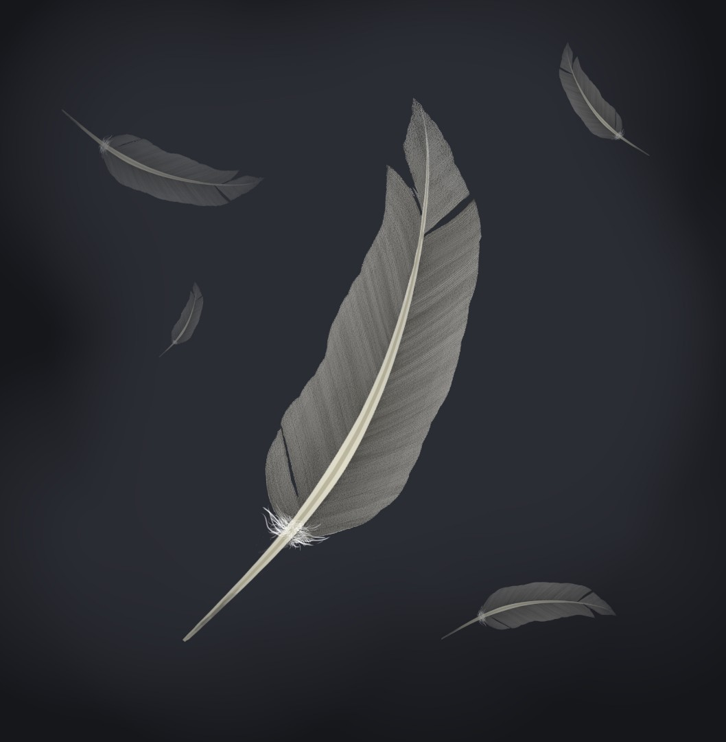 feather 3.jpg