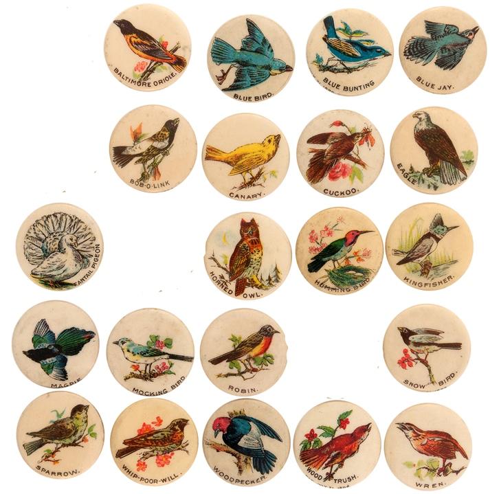 Pepsin Birds - 21.jpg