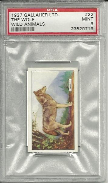 Wolf.12.jpg