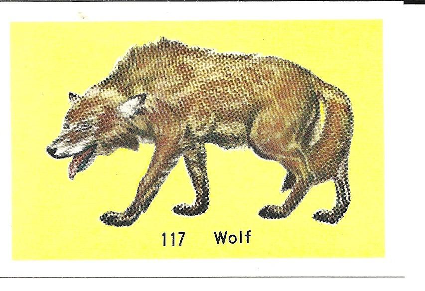 Unknown Wolf.jpg