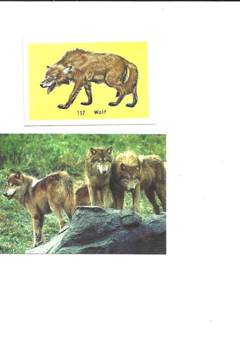 Unknown Wolf.2.jpg