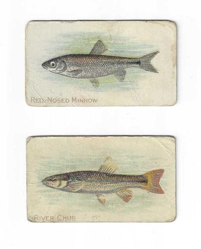 Fish 2 Pack o.jpg