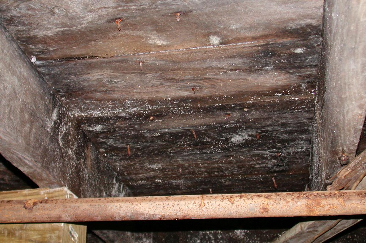 8412 moldy bsmnt ceiling (2).jpg