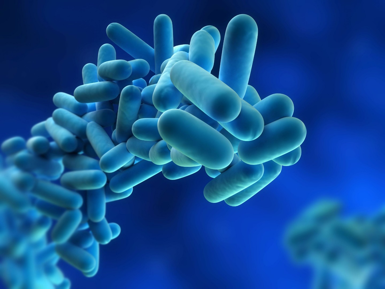 Legionella.jpg