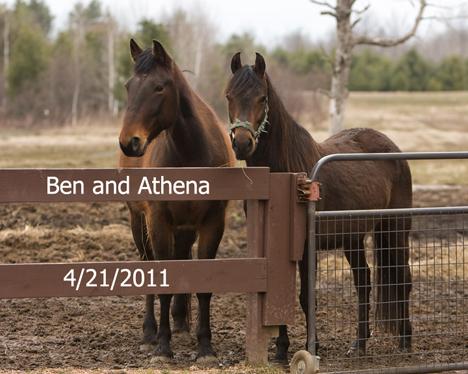 Name: athena-and-ben-1027-april21-webready.jpg, Views: 477, Size: 153.82 KB