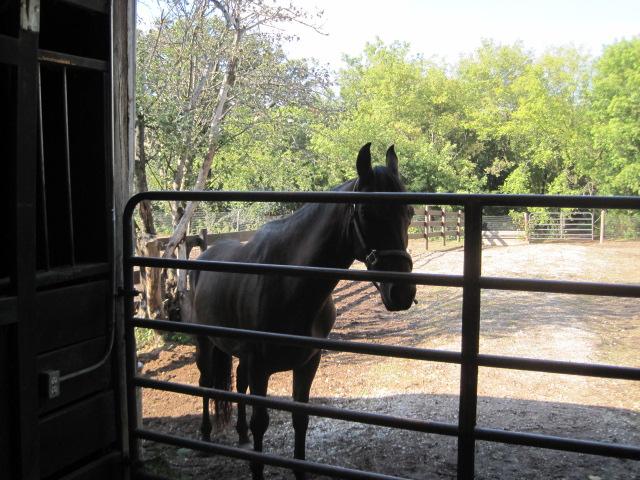 Name: Athena-looking-in-barn.jpg, Views: 888, Size: 244.33 KB