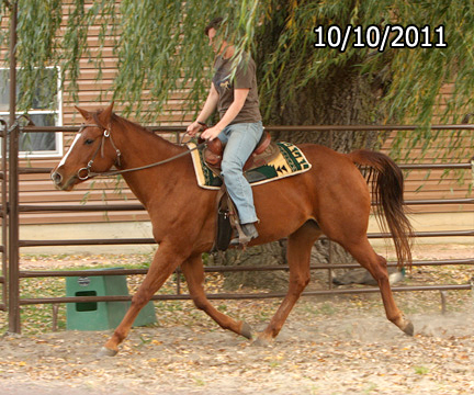 Name: sugarbear1a-trot-oct10-352-copy.jpg, Views: 1271, Size: 152.60 KB
