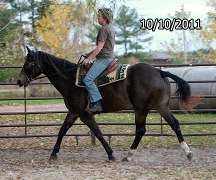 Name: elsie1a-trot-oct10-423-copy.jpg, Views: 4484, Size: 157.16 KB