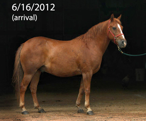 Name: HARLEY-pony-1-JUNE16.jpg, Views: 2468, Size: 59.29 KB