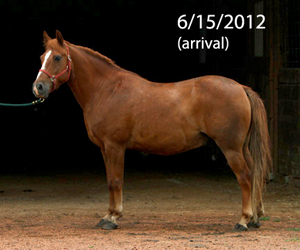 Name: HARLEY-PONY2-JUNE16.jpg, Views: 2481, Size: 62.65 KB