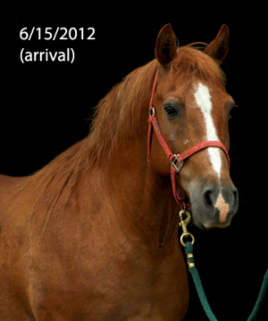 Name: HARLEY-PONY3-JUNE16.jpg, Views: 2491, Size: 72.82 KB