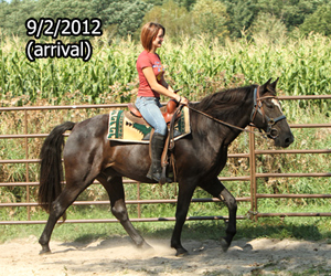 Name: aries-ride1-sept2.jpg, Views: 1401, Size: 114.14 KB