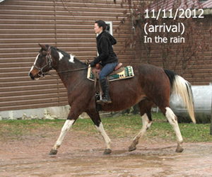 Name: HOLLI1-RIDE-NOV11.jpg, Views: 1732, Size: 81.48 KB