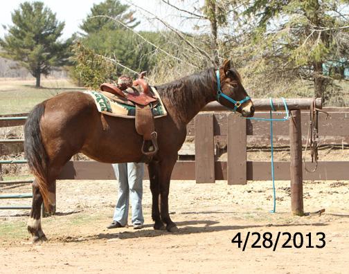Name: elsie-saddle-april28-460.jpg, Views: 930, Size: 179.53 KB