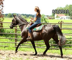 Name: princess-walker-ride-august3.jpg, Views: 856, Size: 102.20 KB