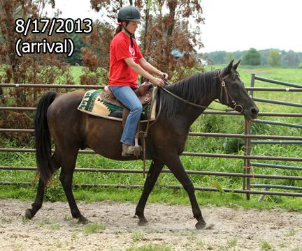 Name: RAVEN-WALK-AUGUST17-660-FORUM.jpg, Views: 713, Size: 149.98 KB