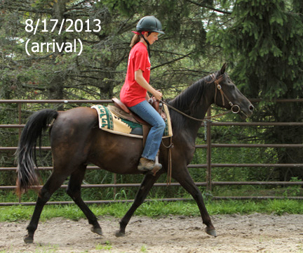 Name: RAVEN-TROT2-AUGUST17-679-FORUM.jpg, Views: 735, Size: 136.32 KB