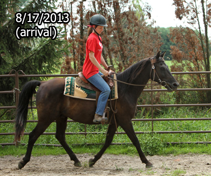 Name: RAVEN-TROT-AUGUST17-677-FORUM.jpg, Views: 708, Size: 147.19 KB