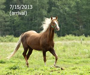 Name: DAKOTA-PAL1-JULY15.jpg, Views: 1758, Size: 85.76 KB