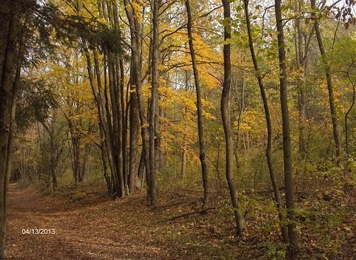 Name: fall_2013-2_020-1.jpg, Views: 537, Size: 290.92 KB