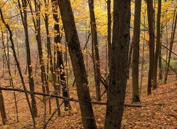 Name: fall_2013-2_034-1.jpg, Views: 541, Size: 335.46 KB