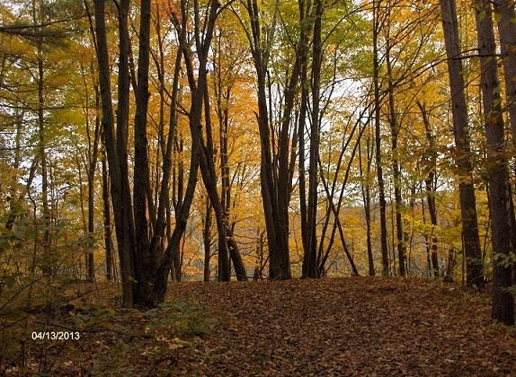Name: fall_2013-2_030-1.jpg, Views: 537, Size: 342.12 KB