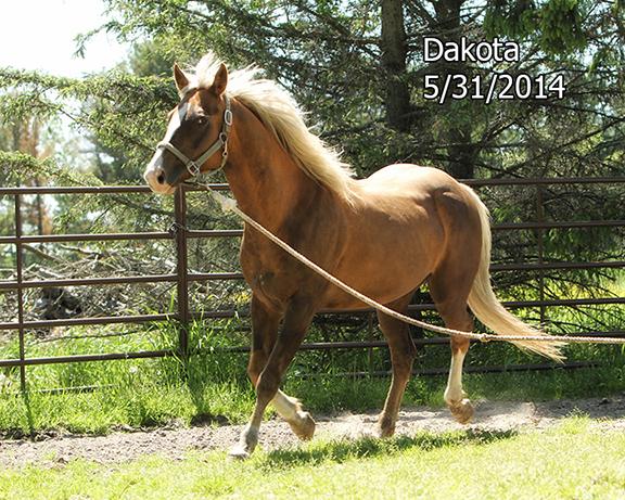 Name: 1VOL-DAKOTA-MAY31-1046-copy.jpg, Views: 4509, Size: 328.00 KB