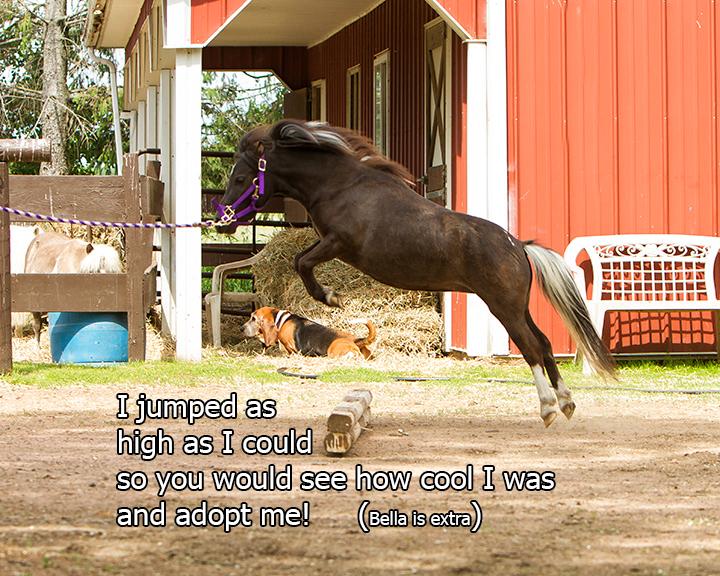 Name: sassy-jump-2244-june14-COPY.jpg, Views: 382, Size: 357.44 KB