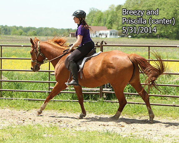 Name: BREEZY-CANTER-PRISCILLIN-MAY31-Pictures-1018-copy.jpg, Views: 1623, Size: 279.78 KB