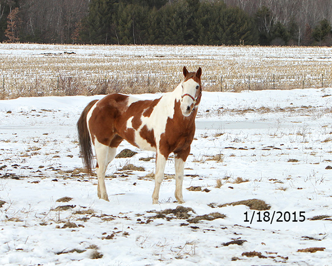 Name: deedee-pasture-jan18-IMG_3841-copy.jpg, Views: 1911, Size: 401.60 KB
