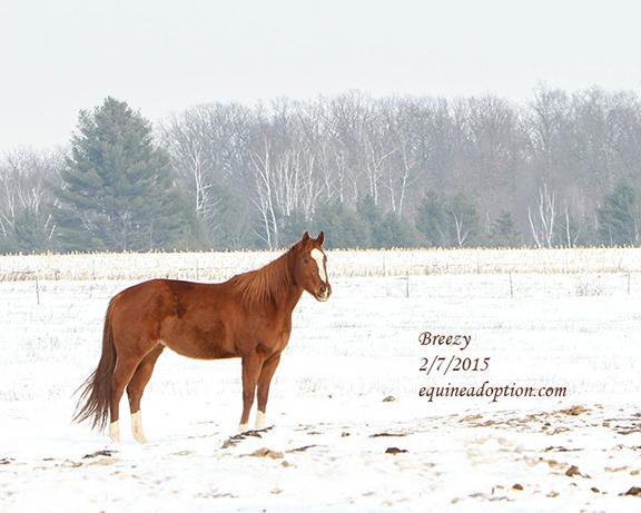 Name: breezy-feb7-IMG_3907-copy.jpg, Views: 1094, Size: 192.42 KB