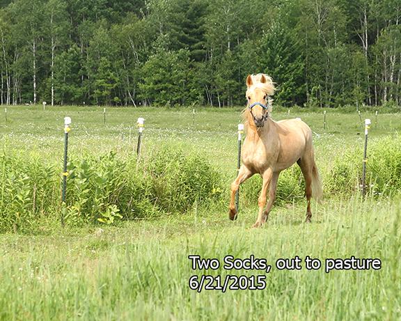 Name: two-socks-pasture1-june21-IMG_9835-copy.jpg, Views: 405, Size: 293.50 KB