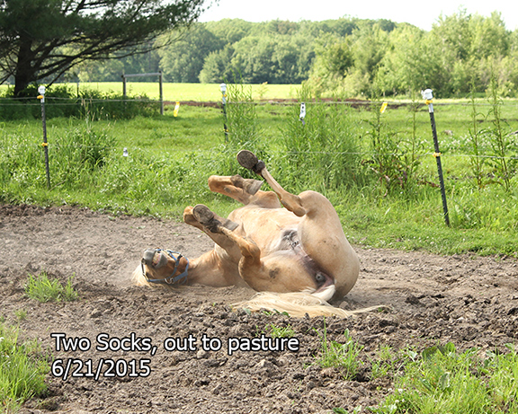 Name: two-socks-pasture2-roll-june21-IMG_9866-copy.jpg, Views: 377, Size: 308.46 KB