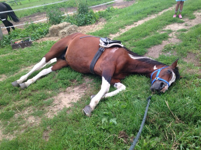 Name: Holli_Laying_Down_with_Tack.jpg, Views: 320, Size: 200.29 KB