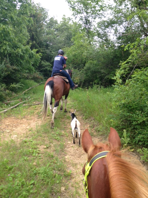 Name: Trail_Ride_with_Gideon_and_Goat_1.jpg, Views: 321, Size: 191.57 KB