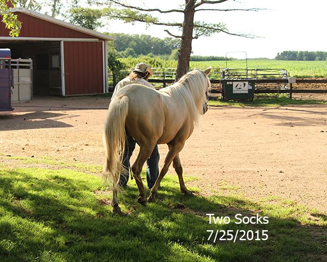 Name: two-socks3-july25-IMG_1584-copy.jpg, Views: 272, Size: 402.95 KB