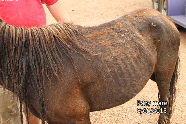 Name: pony-mare-body-august16-IMG_2076-copy.jpg, Views: 1570, Size: 301.75 KB