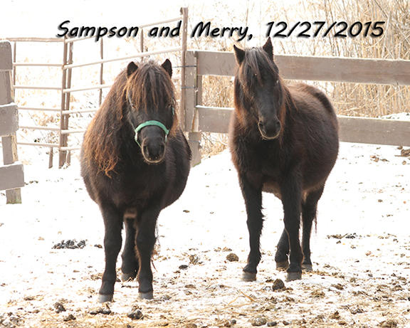 Name: merry-and-sampson-dec27-IMG_0415-copy.jpg, Views: 312, Size: 291.32 KB