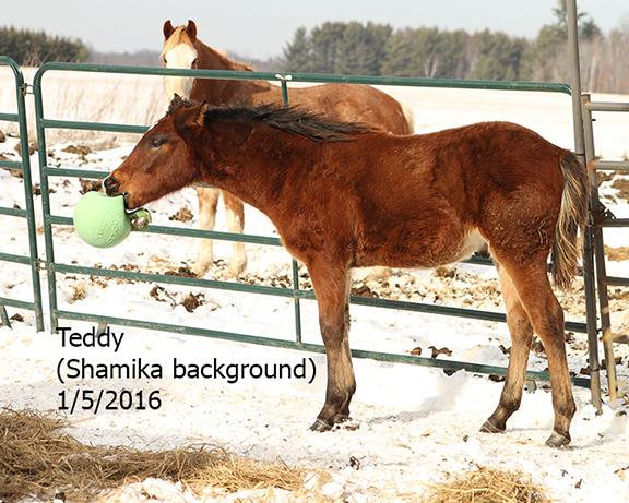 Name: teddy1-jan5-jollyball-IMG_0879-copy.jpg, Views: 1467, Size: 333.34 KB