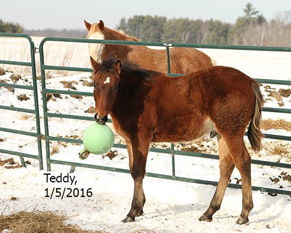Name: teddy2-jan5-jollyball-IMG_0887-copy.jpg, Views: 1478, Size: 305.21 KB