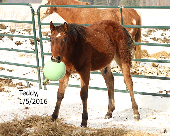 Name: teddy3-jan5-jollyball-IMG_0889-copy.jpg, Views: 1454, Size: 319.33 KB