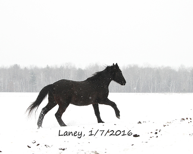 Name: laney-snow-jan7-IMG_0971-copy.jpg, Views: 965, Size: 128.88 KB