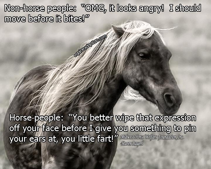 Name: bambi_attitude_horse_people_nonhorse_people_FACEBOOK.jpg, Views: 193, Size: 194.19 KB